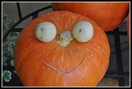 happy pumpkin opt
