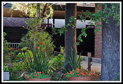 Branham Office Garden