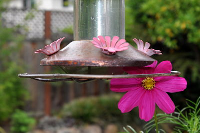 hummingbird feeder and Cosmo