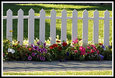 flowers at picket fence