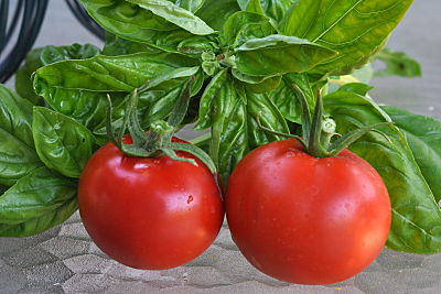 Tomatoes and Basil from the Garden