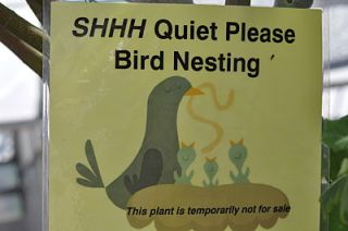 Yamagami's bird nesting sign