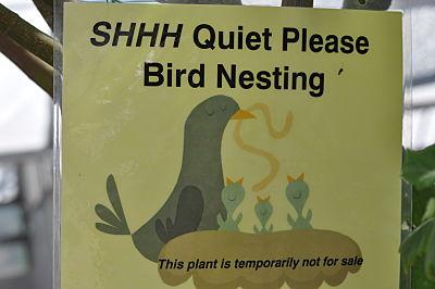 Yamagami's bird nesting sign