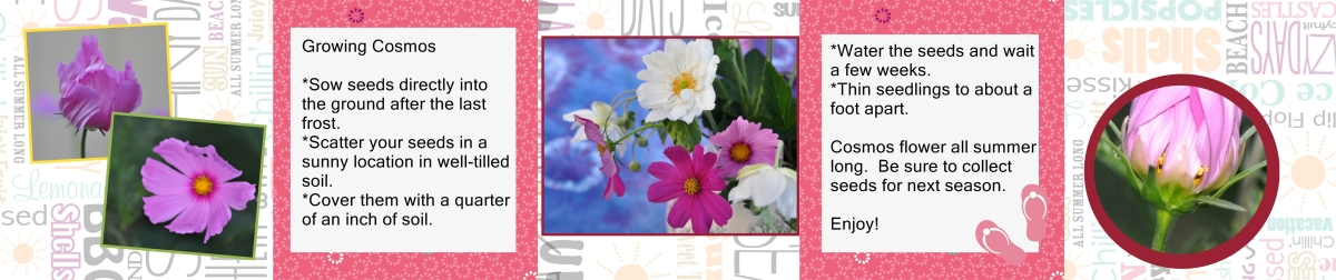 Cosmos Seed Cards - Back Panel