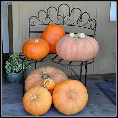 garden bench with pumpkins