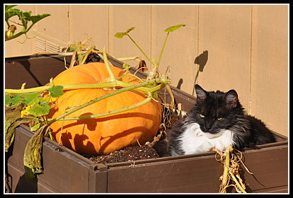 Kitty in the garden bed