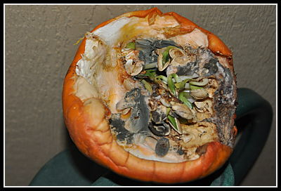 molding pumpkin sprouting seeds