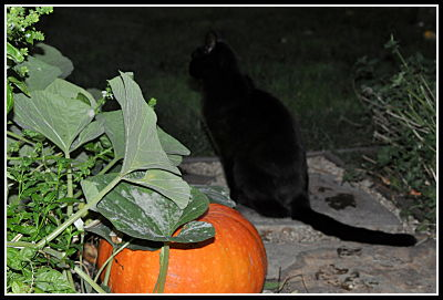 Slinky near the pumpkins