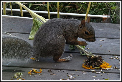 squirrel with stem