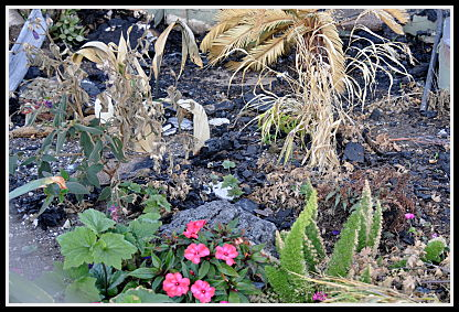 SummerWinds fire damaged plants
