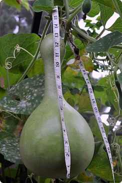 birdhouse gourd with tape measure