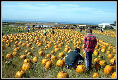 Bob's Pumpkin Farm, Half Moon Bay
