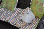 loung cushions