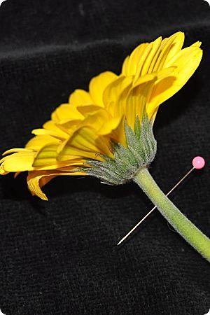 gerbera daisy with pin