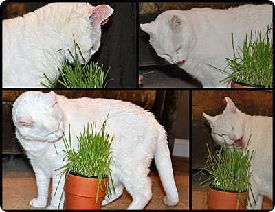 KT eating grass