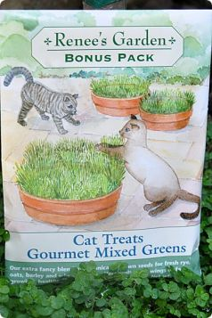 Renee's Carden cat grass seeds