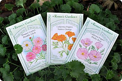 Renee's garden flower seeds
