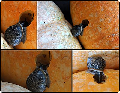snail eating pumpkin collage