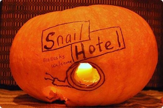 snail hotel carved