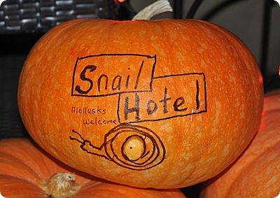 snail hotel closeup