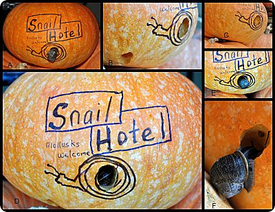 snail hotel collage