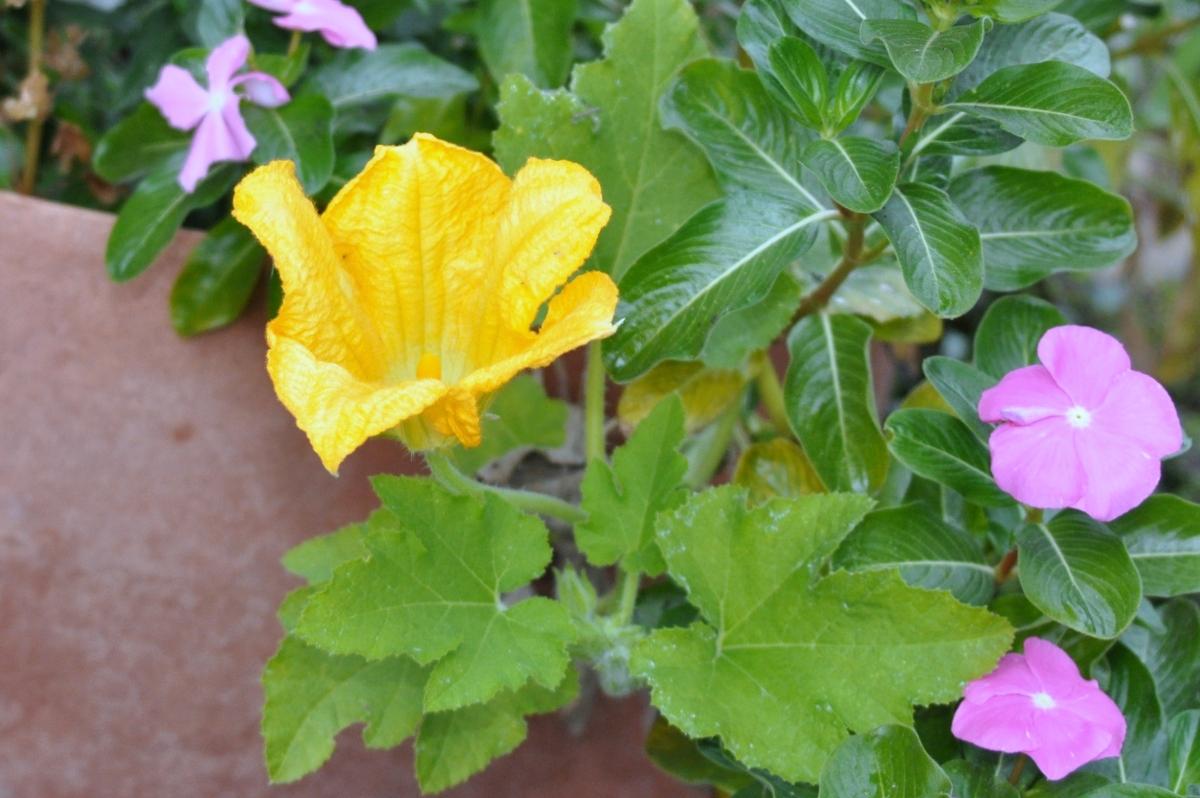off season pumpkin flower