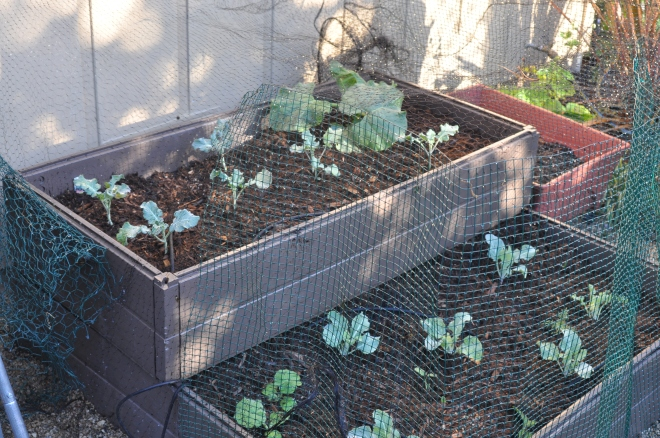 Garden Cage