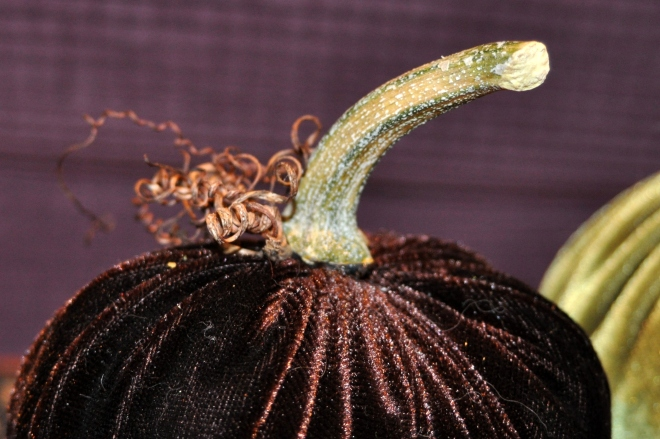 Velvet pumpkin stem