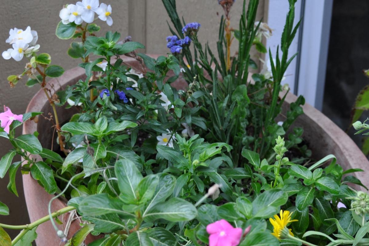 Garden Hodge-Podge