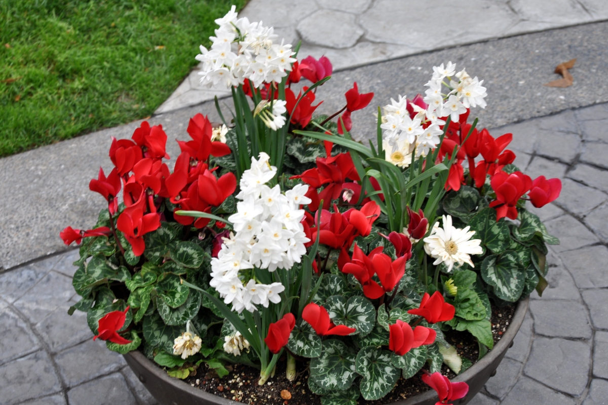 Red and white pots
