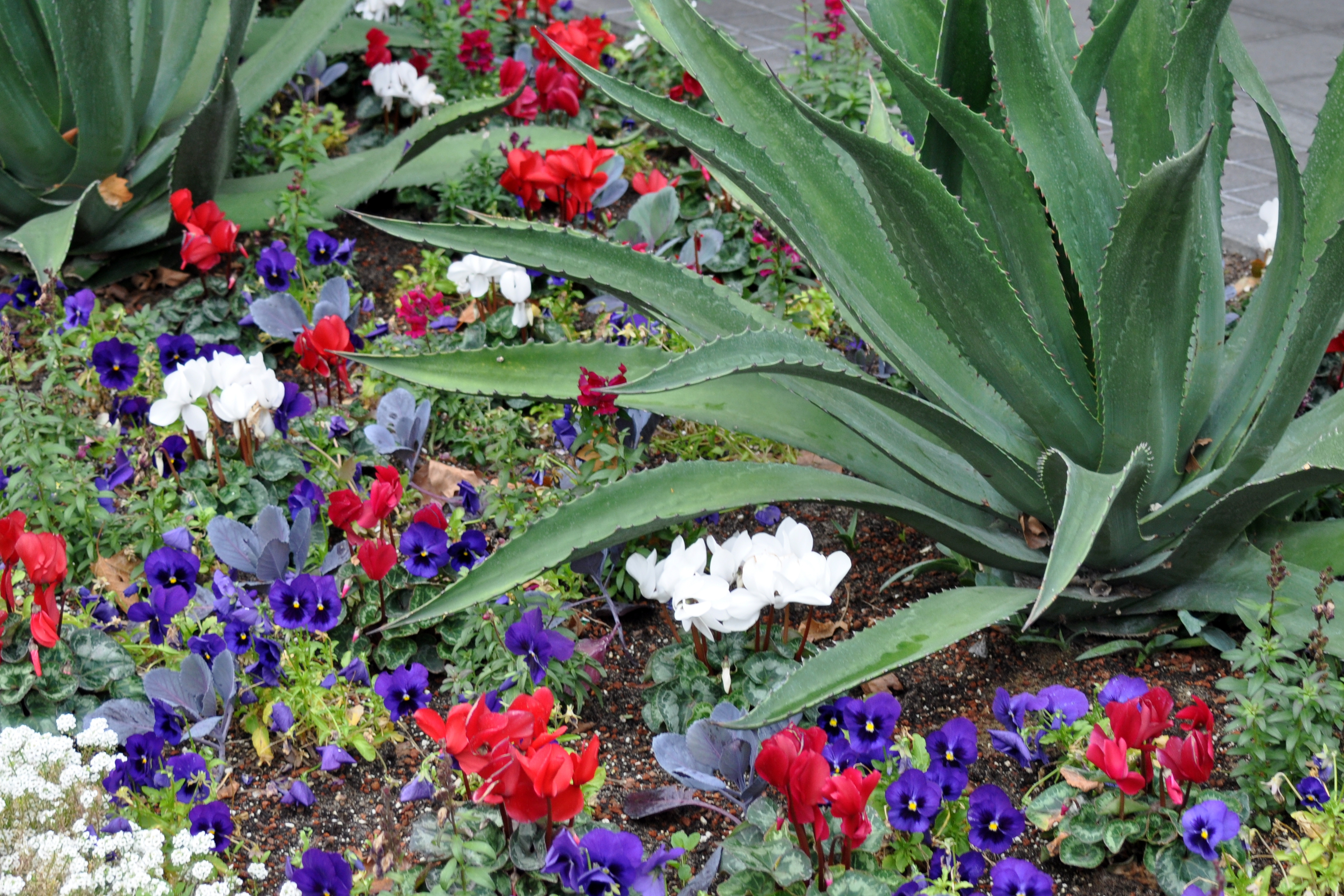 Succulents and Annuals