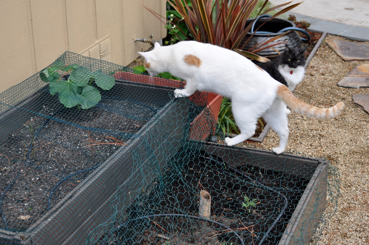 cat on the garden box