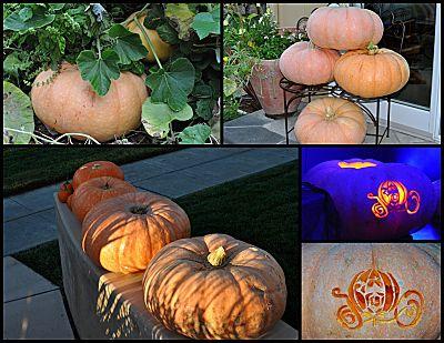 pumpkin post mortem collage