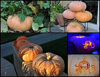 pumpkin post mortem collage