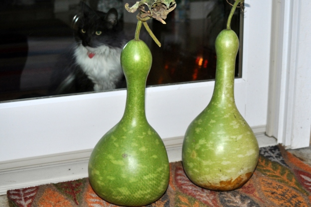 two birdhouse gourds