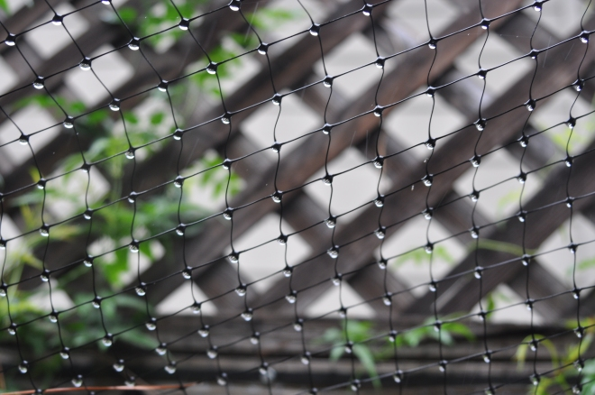 cat fencing collects rain