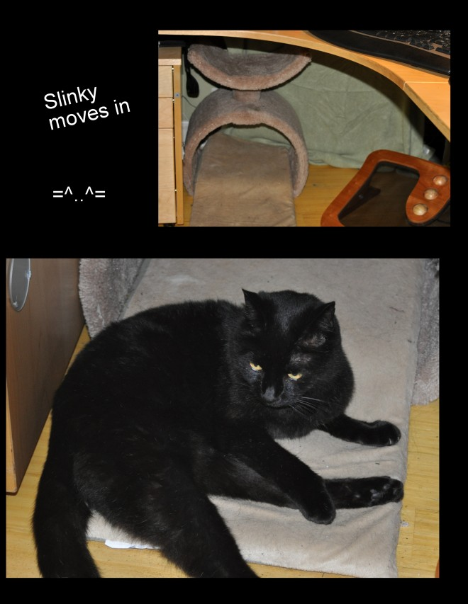 Slinky Moves In Collage