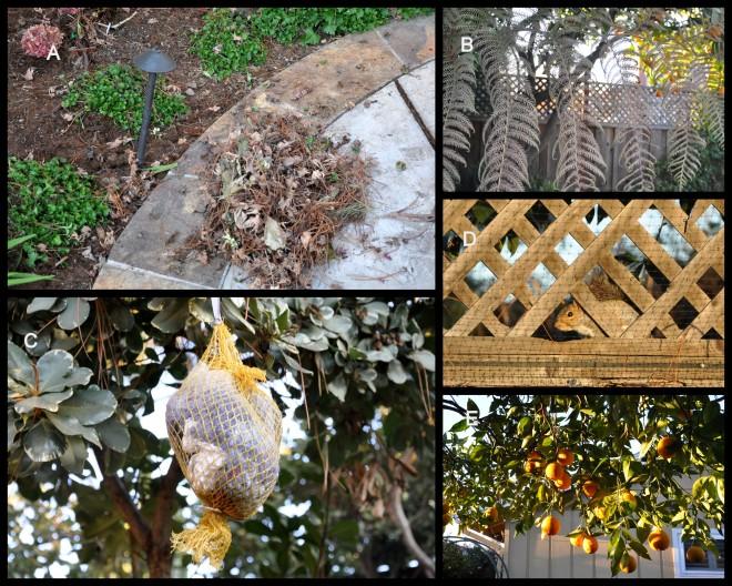 winter garden collage