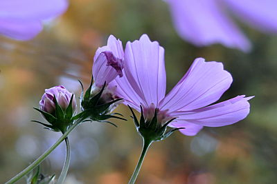 cosmos looking up_opt