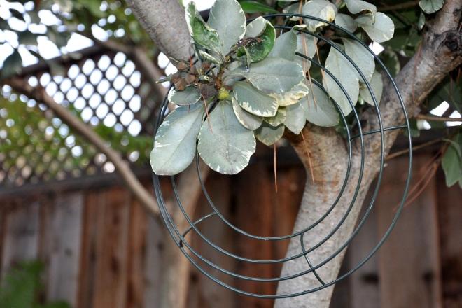 Wire Wreath Frame