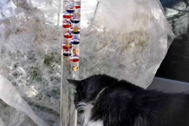 Galileo Thermometer
