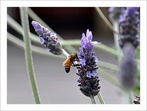 Bee's Make Honey