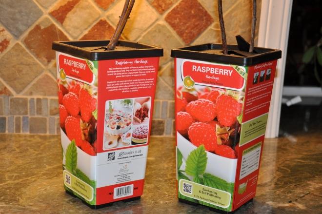 Early Heritage Raspberries