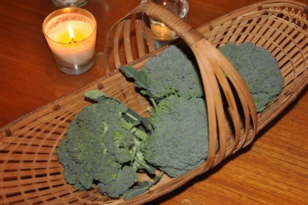 Basket of Freshly Picked Broccoli
