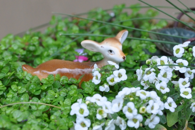 deer and Alyssum