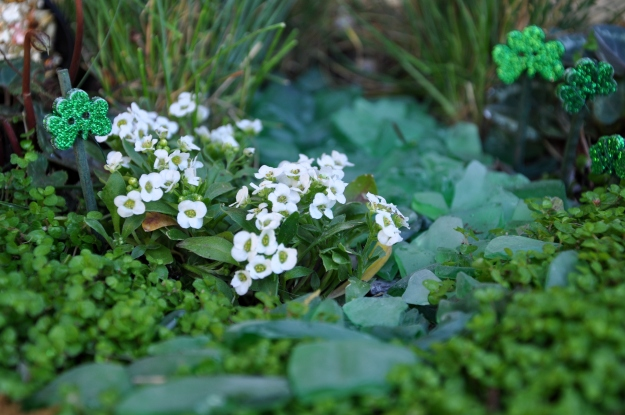 fairy garden design | gardeningnirvana