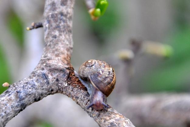 Snail at apex of tree