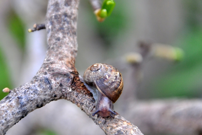 Snail at apex of tree