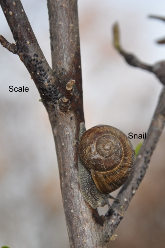 Scale and Snail