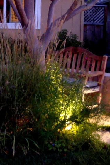 gardening after dark